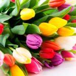 Стихи поздравления с 8 Марта друзьям, коллегам, учительнице, бабушке непременно порадуют их