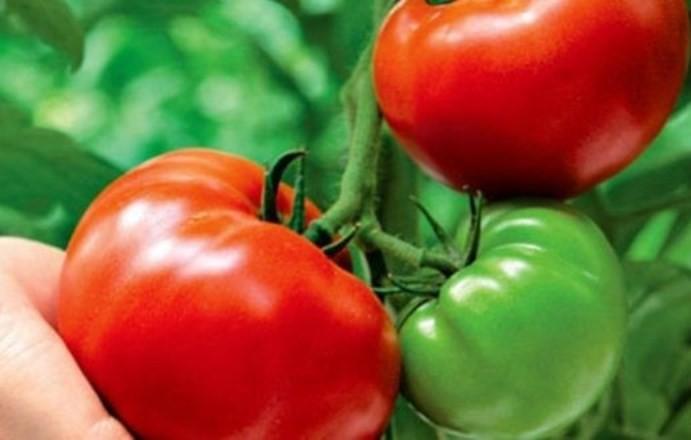 Подкормку для рассады перца и помидоров для роста и толщины ростка можно приготовить дома