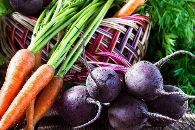 Когда можно сажать свеклу и морковь в открытый грунт в Подмосковье в 2019 году, сообщают специалисты