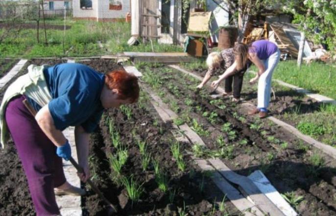 Подготовлен новый законопроект о налоговых льготах для садоводов и огородников