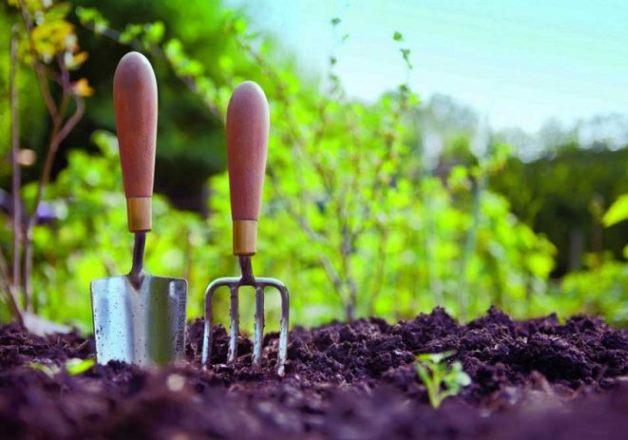 Лунный посевной календарь на май 2019 года подскажет, что и когда высаживать в открытый грунт