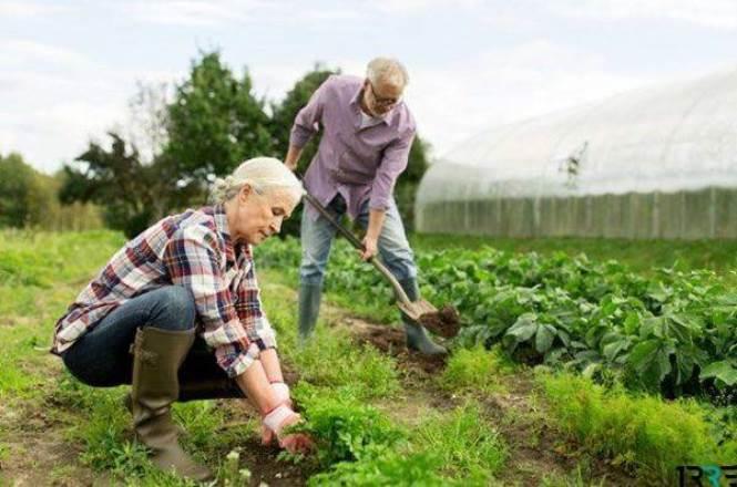 Налог на огород для дачников и садоводов в 2019 году