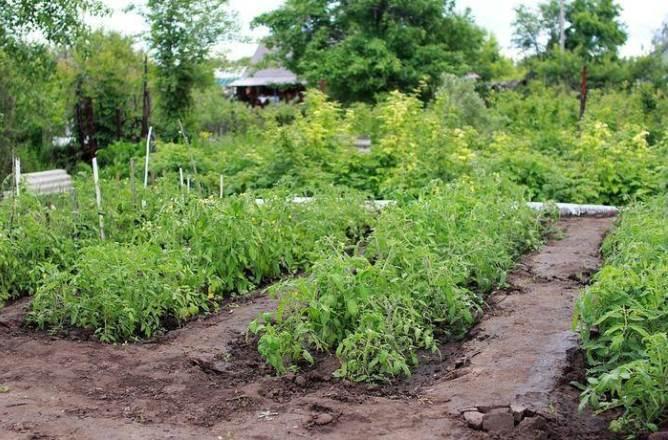 Можно ли на Троицу садить в огороде