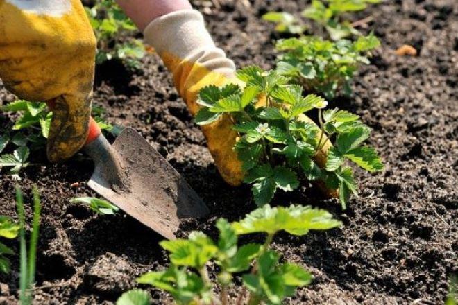 Какие работы по уходу за огородом проводятся в августе 2019 года