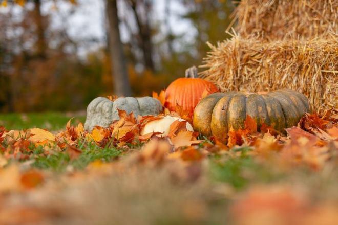 Что нужно сделать садоводу в октябре на участке, чтобы улучшить развитие растений в будущем году