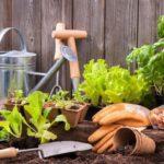 Лунный посевной календарь для огородников и садоводов на апрель 2020 года по дням