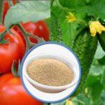 Как правильно приготовить дрожжевую подкормку для помидор и огурцов, чтобы повысить их урожайность