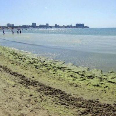 Цветение моря в Анапе заставляет искать альтернативу