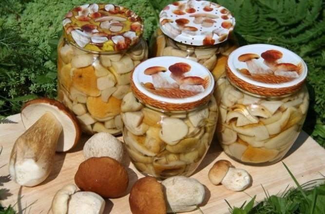 Как правильно собирать, обрабатывать и заготавливать на зиму грибы