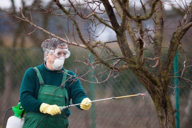 Плодовые деревья и кустарники нуждаются в специальной подкормке осенью