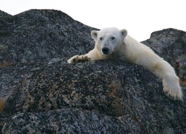 Как страны мира готовятся к катаклизмам, вызванным изменением климата