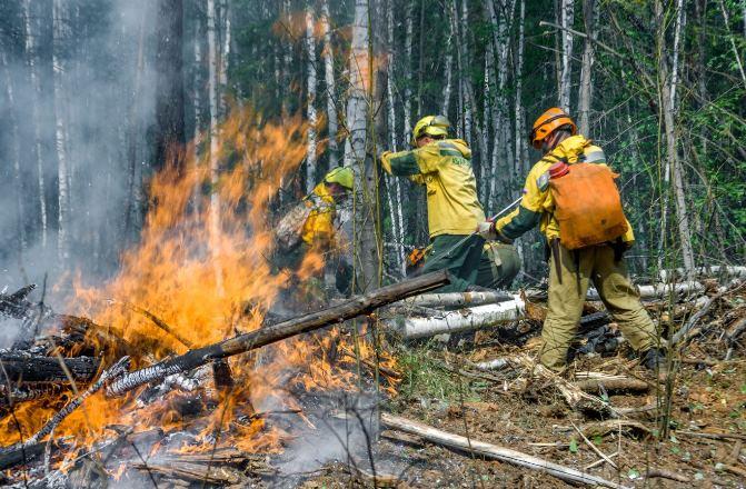 Лесные пожары и таяние вечной мерзлоты в России: так проявляется климатический кризис 2020 года