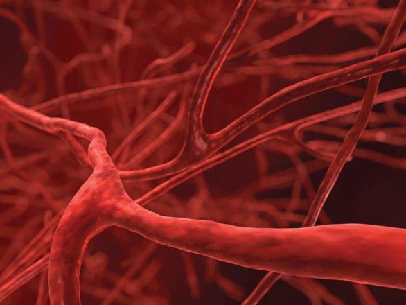 Биоинженеры разработали продвинутую замену кровеносным сосудам