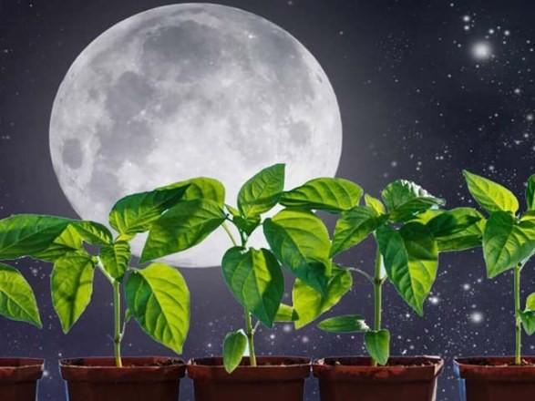 Когда сеять семена на рассаду в 2021 году по лунному календарю