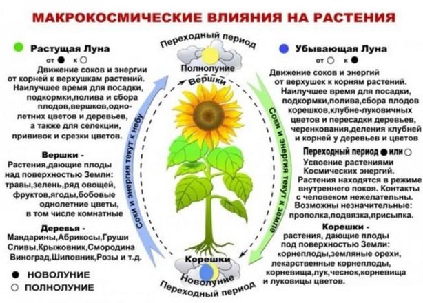 Лунный посевной календарь подскажет, что делать садоводам и огородникам в апреле 2021 года